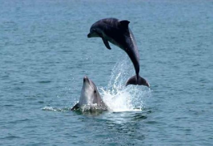 Фото дельфинов.